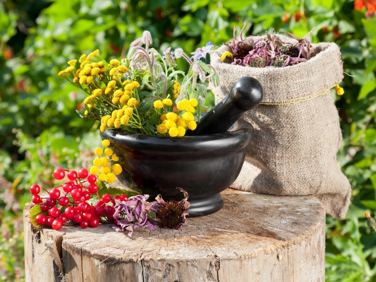 Аптекарский огород: 10 самых полезных лекарственных растений для дачи