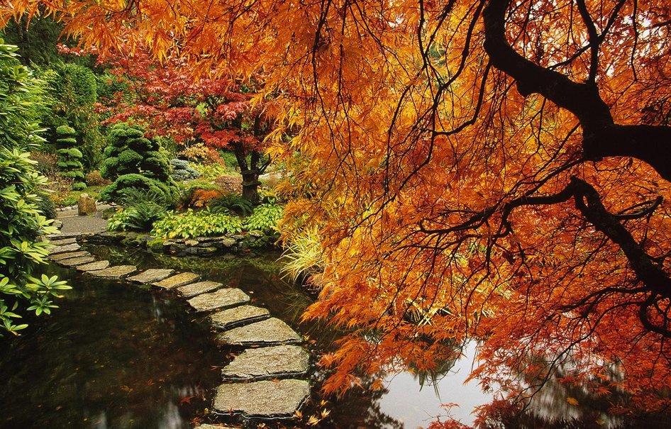 Сад и участок в  цветах:   Бордовый, Коричневый, Темно-зеленый, Черный.  Сад и участок в  .