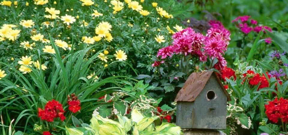 Как создать сад мечты своими руками?
