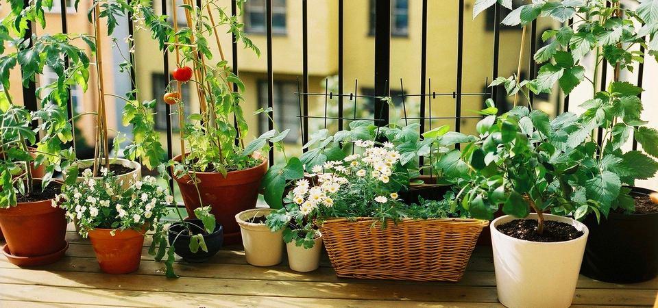 Что из овощей можно вырастить на балконе: 10 видов и правила ухода