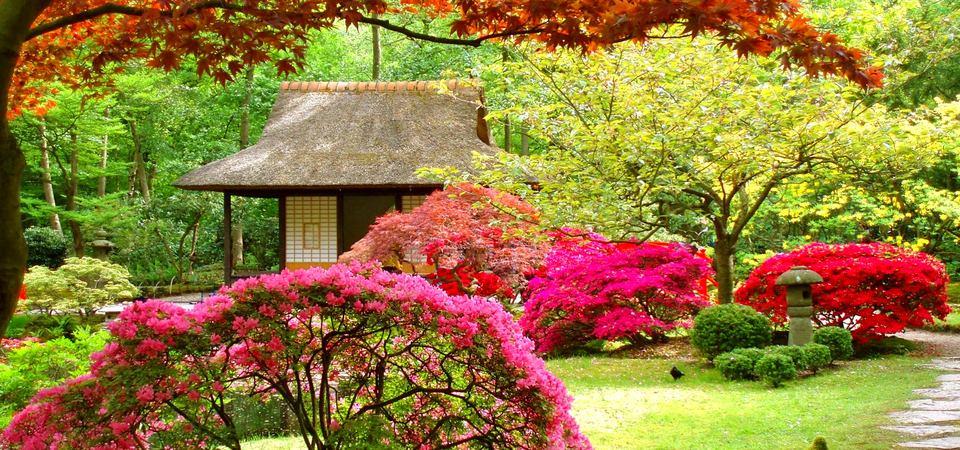 Как обустроить японский сад: советы ландшафтного дизайнера