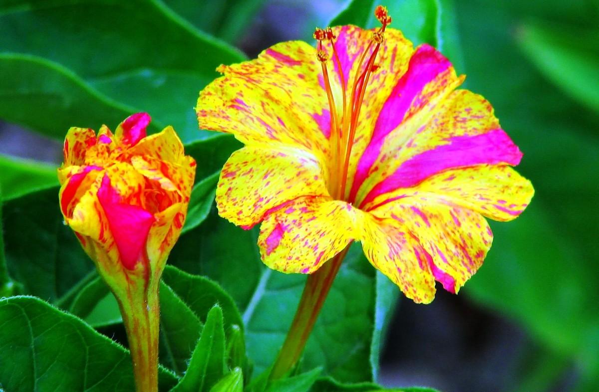 Ландшафт в цветах: красный, оранжевый, желтый, розовый, лимонный. Ландшафт в .