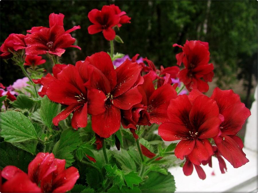 в цветах: бордовый, темно-зеленый, темно-коричневый.  в стиле экологический стиль.