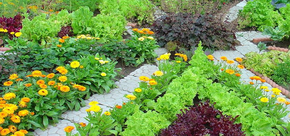Идеи для сада: 21 пример превращения грядки в овощную клумбу