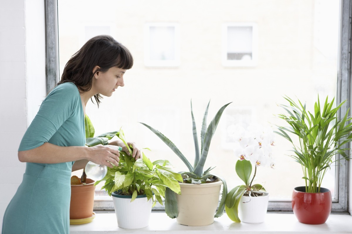 Правила ухода за комнатными растениями в феврале