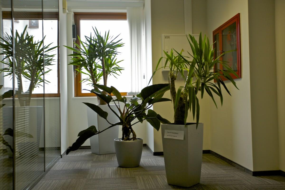 Он решил исправить то, что можно исправить — добавить солнца и красок в офис компании.