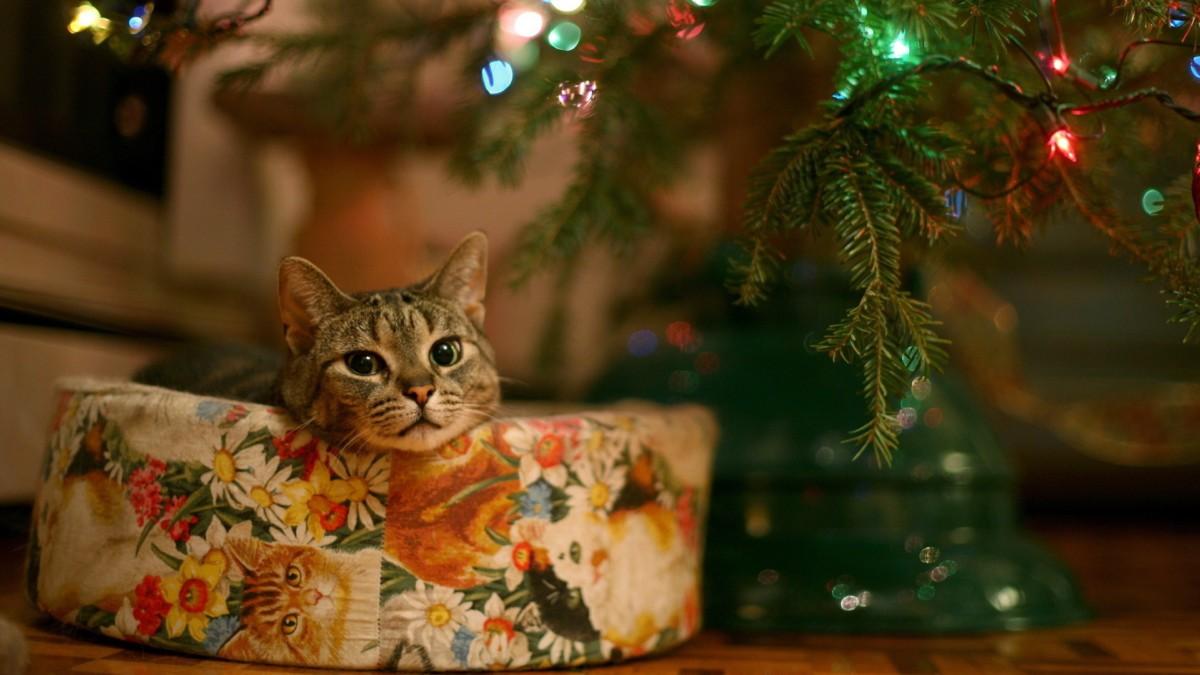 Стартовал конкурс на лучшую интерпретацию новогодней ёлки