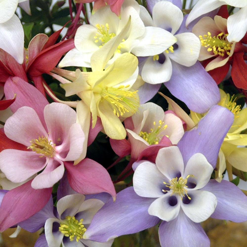 Дачные растения, цветущие всё лето: 10 саженцев для клумб