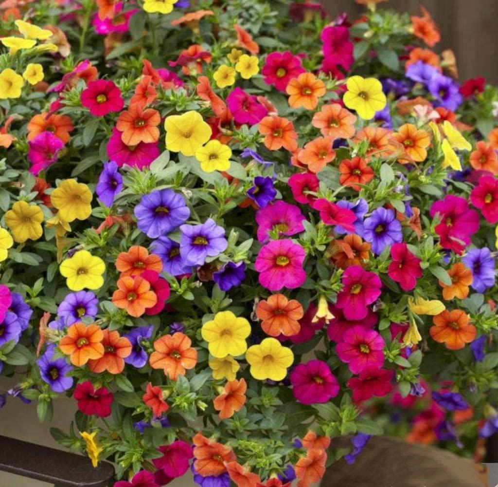 Солнцелюбивые цветы для южных балконов: 10 растений, которые не боятся солнца