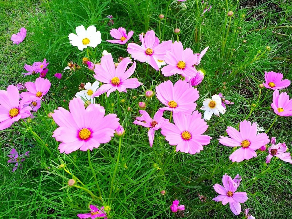 13 идей для клумбы на солнцепёке: цветы, которые не боятся жары